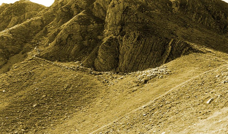 Κοπάδι σε βοσκή κοντά στον Μεγάλο Τράπο